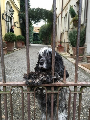 An adorable welcome at Villino di Porporano