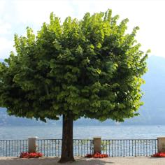 Villa d'Este, Lake Como