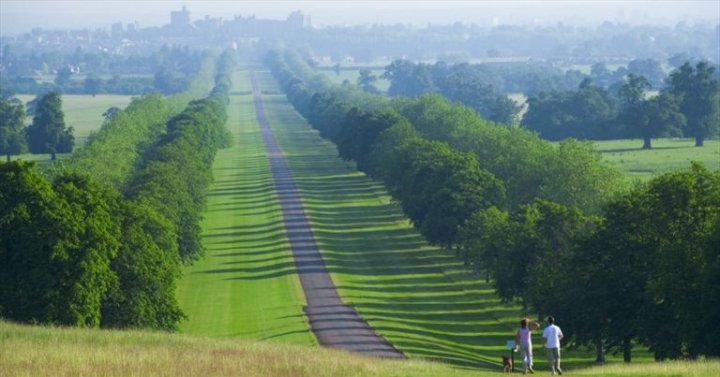 Windsor Great Park (Ph: WGP)
