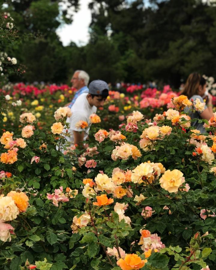 Rose Garden, Annalee Archie