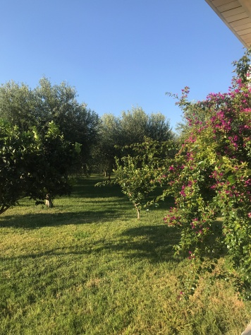 A gorgeous late September day at Masseria Potenti