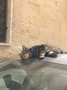 Cats can be found everywhere in Puglia, lounging wherever they catch a little sun. This time on the hood of a car.