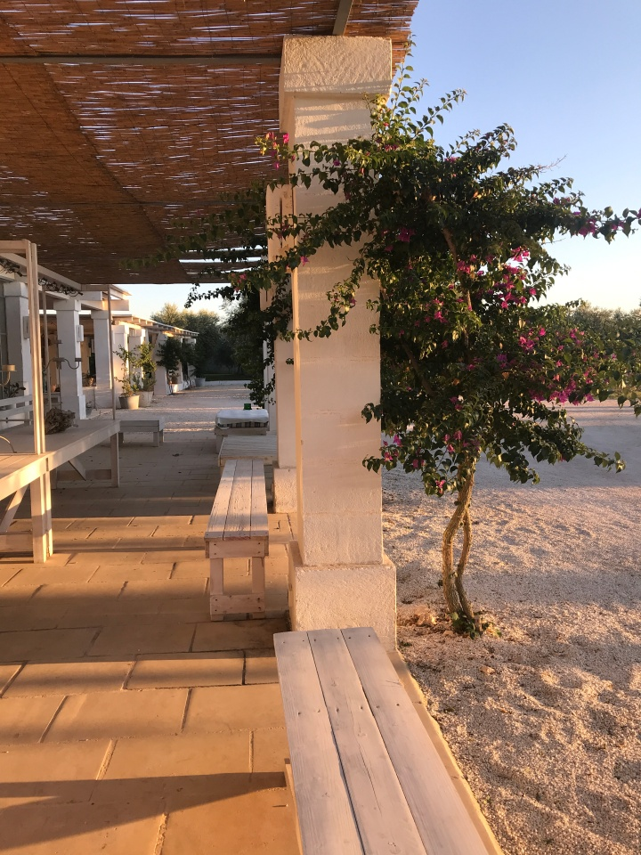 Evening light, a la late September, Masseria Potenti
